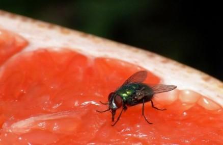 diarreia-vomito-febre-sao-sintomas-da-virose-da-mosca-saiba-como-se-prevenir1455366907