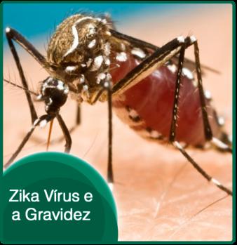zika-virus-e-gravidez123