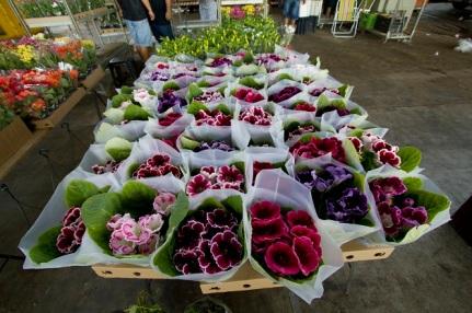 feira-de-flores-002